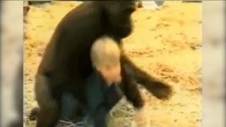 Baby With Gorilla in Cage_ Animal Activist Records Video of his Child With 300 Pound Animal