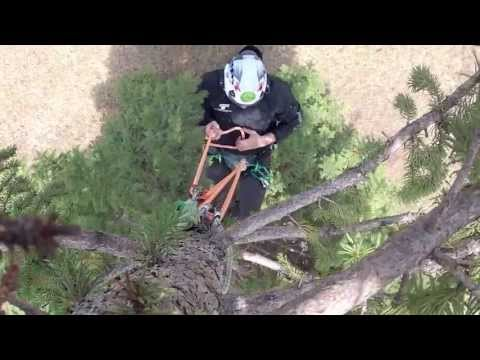 Hitch Climbers' Guide to the Canopy part 1