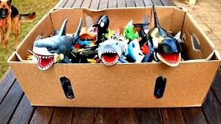 Box Of Toys Sharks 🐬 Wild Animals Jungle Sea Animal Collection Fun Kids Educational Video!