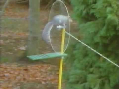 Squirrel on an Impossible Reggae Mission
