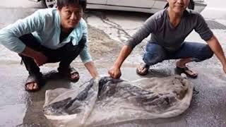 Ngư dân Đài Loan bắt được cá chình khổng lồ, nhưng như linh tính mách bảo, anh quyết định phóng sinh