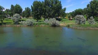 VLOG 2: Eating baby food + swimming in Snake River, Idaho!