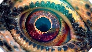 VOYAGE OF TIME Trailer (Brad Pitt, Terrence Malick - Documentary, 2016)