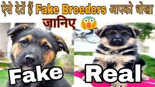 ऐसे देतें हैं Fake Breeders आपको धोखा // Dog Farm In India // Dogs Price List In India 2019/ dogs