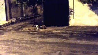 BRIGA DE GATOS / CAT FIGHT