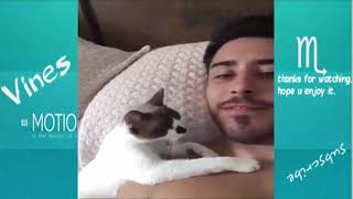 ►Funny And Cute Animals Videos Compilation| animals TV