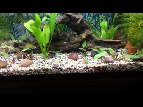 кошачий сом как ухаживать в аквариуме жилья