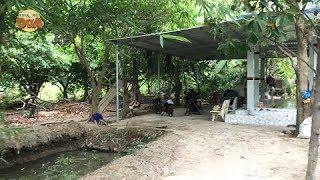 Cảnh nhà Khương Dừa ở Bến Tre đẹp không thua gì resort 5 sao???!!!