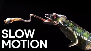 Deadly Animal Attacks in Slow Motion - Slow Motion - Earth Unplugged