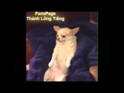 Cười té nghế với thánh lồng tiếng :))