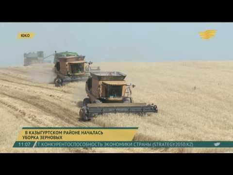 В Казыгуртском районе ЮКО началась уборка зерновых