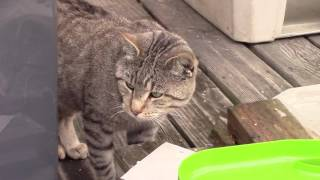 Gail makes insulated house for stray cats on porch
