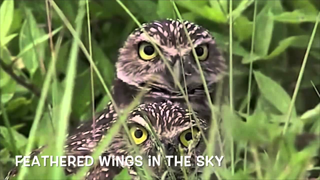 how to say owl in japanese