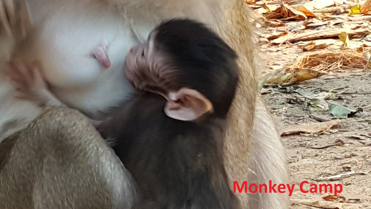 Real baby monkeys