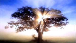 Suntree Mix ☀ Progressive Psy Trance 2014 |HD|