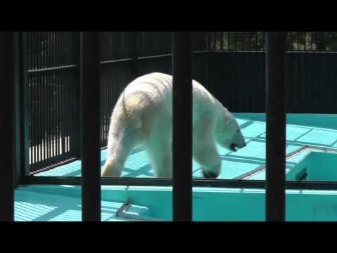 2011年5月26日 おびひろ動物園 イコロの往復歩き