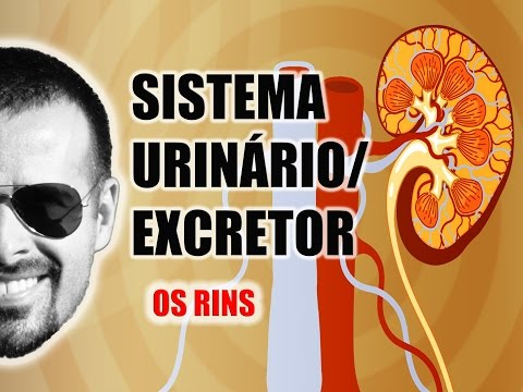 Vídeo Aula 030 - Sistema Excretor/Urinário - Os Rins: A filtragem do sangue e a excreção de toxinas