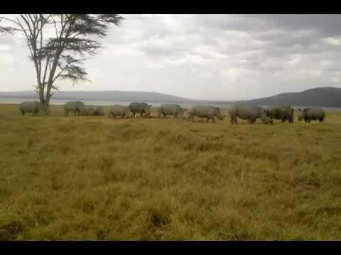 Rhino in the Great Rift Valley, Kenya