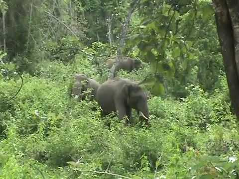 elephant karnataka forest near tholpetty