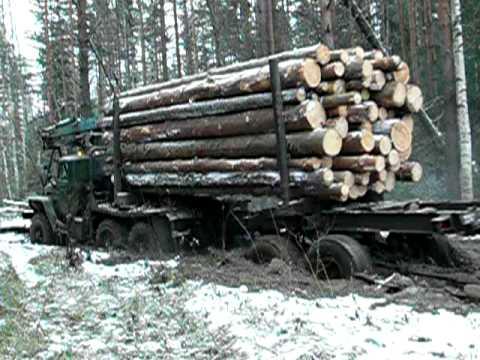 Американские лесовозы видео