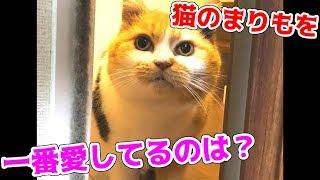 うちの子が世界一!!猫のまりもの写真を見せあってみた!