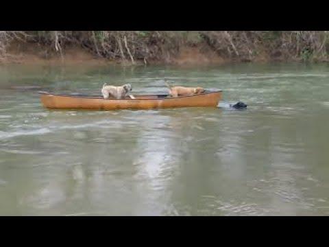 船に残された犬を勇敢な犬が泳いで助ける
