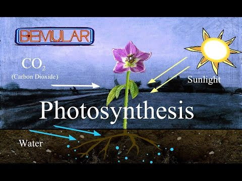 Bemular - Photosynthesis (Educational Kids Music & Video)
