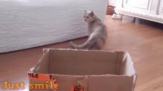 Funny And cute cat-funniest cats compilation 2019