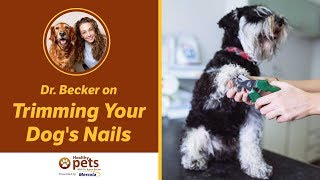 Dr. Becker on Trimming Your Dog's Nails