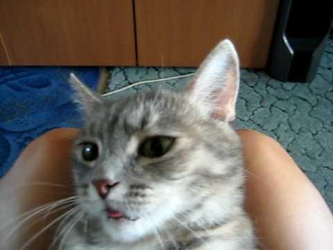 Что делать если кот шипит на человека