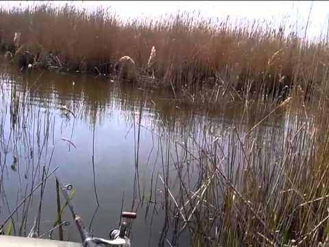 ловля карася в середине апреля на пруду