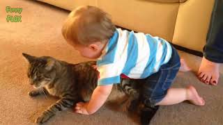 Cutest Cats Compilation 2017   Best Cute Cat Videos Ever