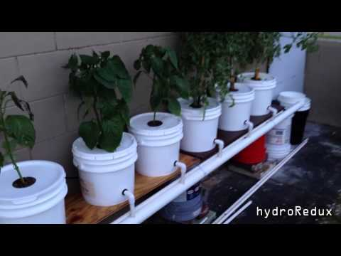 Hydroponic Bato/Dutch Bucket System update and How to cool water reservoir .