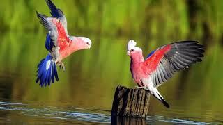 15 Most Beautiful Parrots