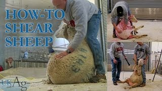 How to shear sheep - blow by blow