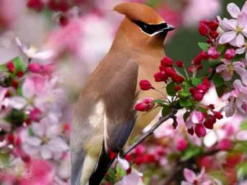 Bonitas imagenes de aves y flores, con musica para relajarse.