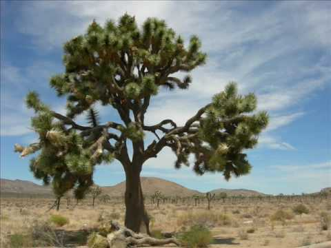 Song Joshua Tree Joshua Tree Original Song