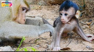 WOW! So Cute newborn baby Chris learn to walk that mom Tara see&stay for help him Monkey Daily 643
