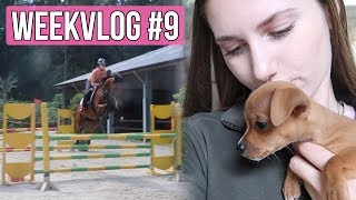 SUPER springles & een PUPPY! | Weekvlog #9