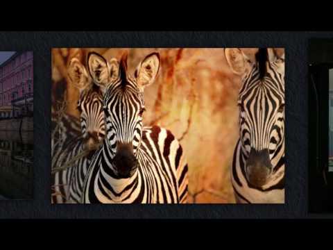 Animal & Travel Photography Portfolio