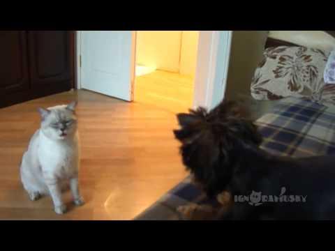 Cat: Who brought it into my house? / Кто принес это в мой дом?