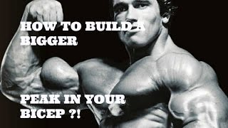 How to build a bigger peak in your bicep like ARNOLD SCHWARZENEGGER