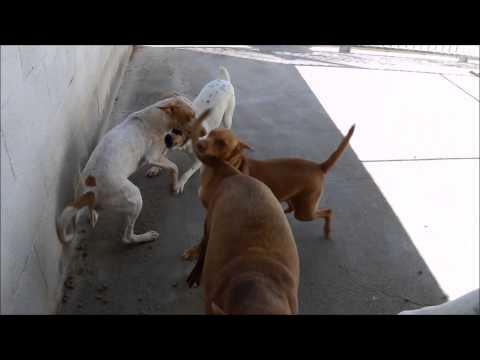 Animalinneed: Video of Nena