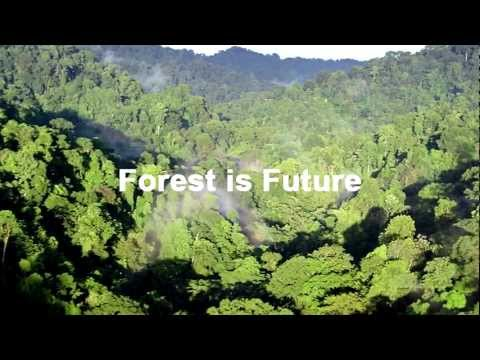 Forest is Future