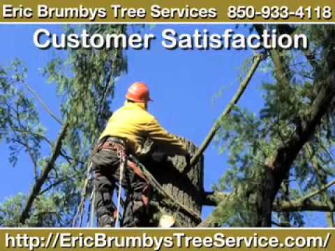 Eric Brumbys Tree Services, Tallahassee, FL