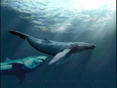 Great Megalodon Chases A Large Sperm Whale See What