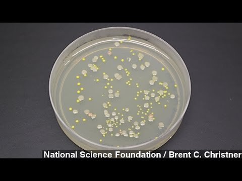 Thousands Of Species Found In Lake Under Antarctic Ice