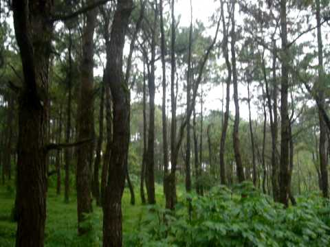 Tropical Forest in the Philippines 1