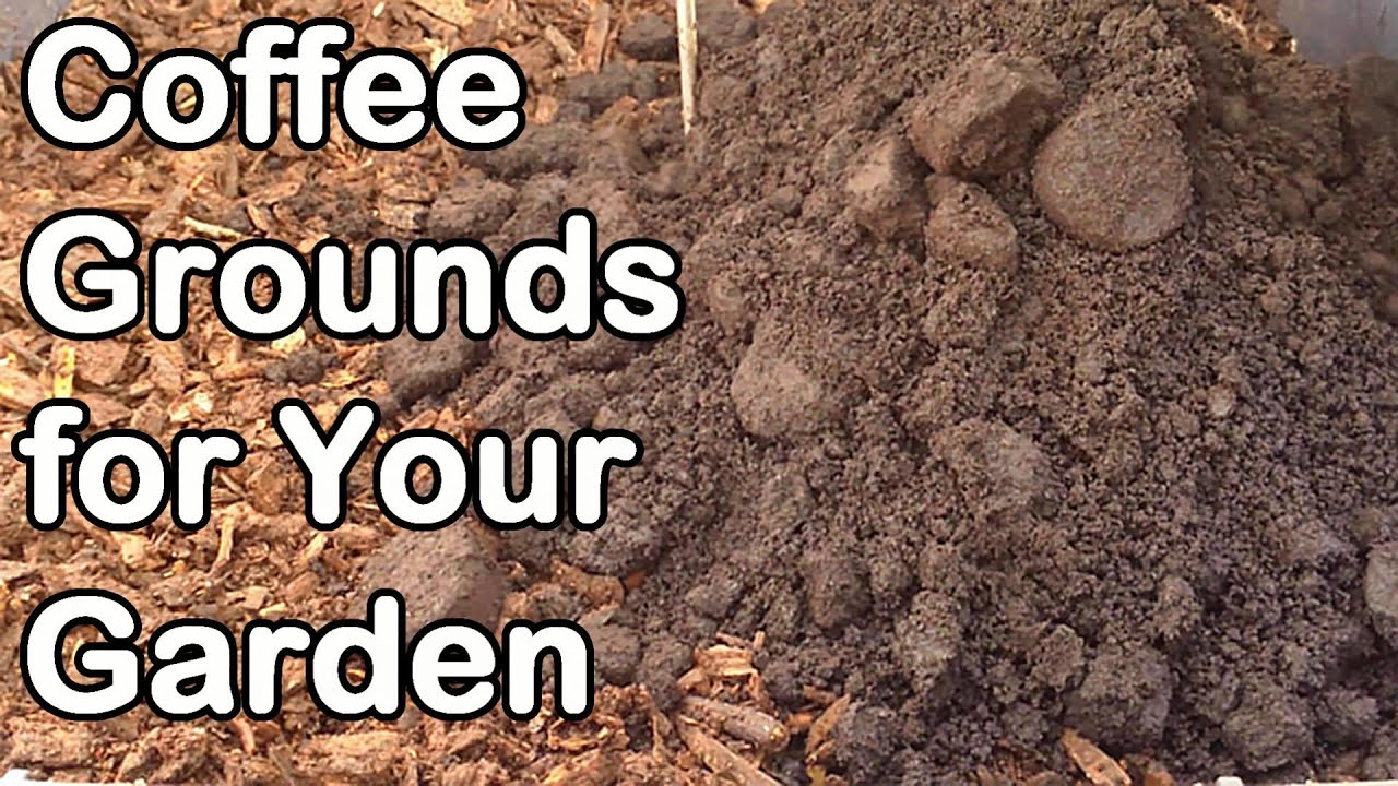 Coffee grounds how and why we use them in our garden youtube Coffee grounds for garden