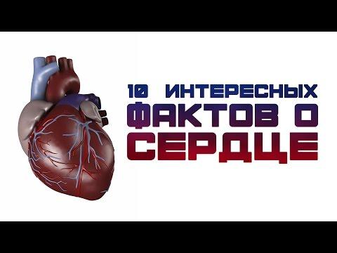 10 ИНТЕРЕСНЫХ ФАКТОВ О СЕРДЦЕ